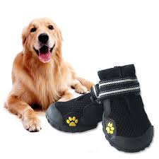 dog shoes | dogsdogsgo.com